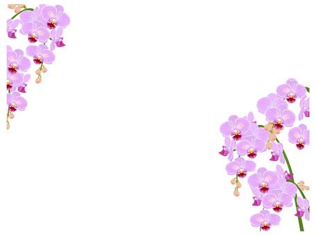 ランのフレーム ピンク