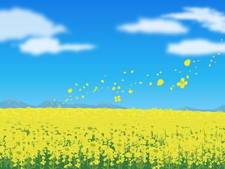 Rape flower's landscape Landscape 04