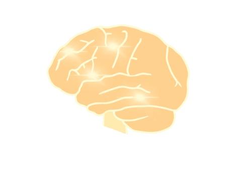 Human organ brain neurotransmission