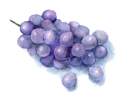 Grapes painted with transparent watercolor