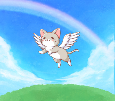 Cat flying in the sky
