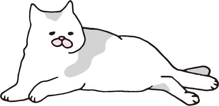 Cat sleep 4