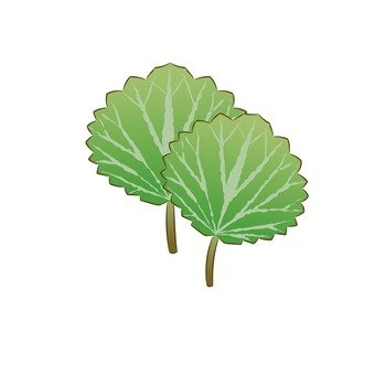 Fuki leaves