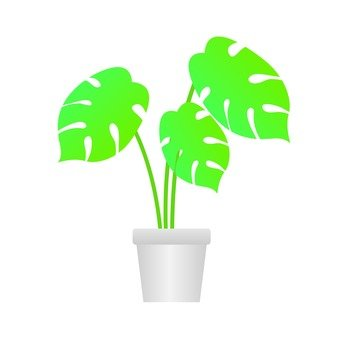 Houseplant - Monstera