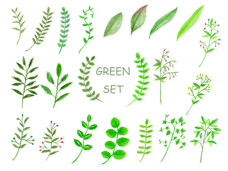 Leaf set (color pencil drawing)