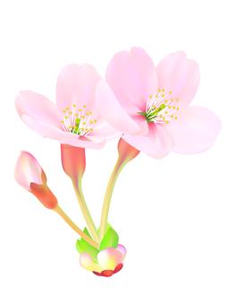 0004_ 벚꽃