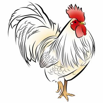 Chickens 05