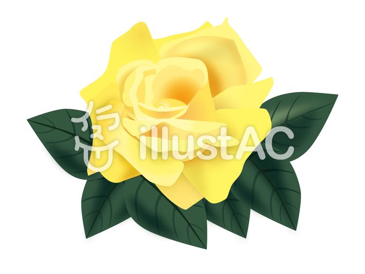 黄色のバラのイラスト