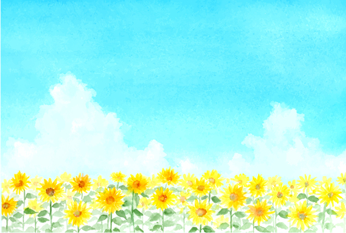 Sunflower field drawing with transparent watercolor