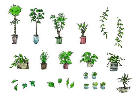 식물 관엽 식물