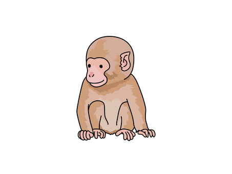 Japanese macaques (apes)