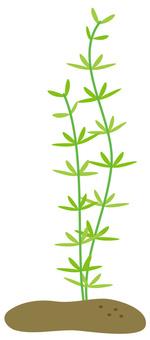 Aquatic plants and summer material