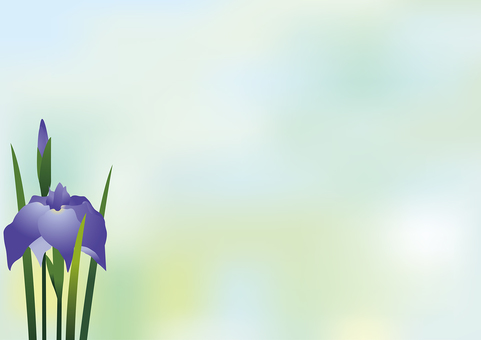 Iris flower 15