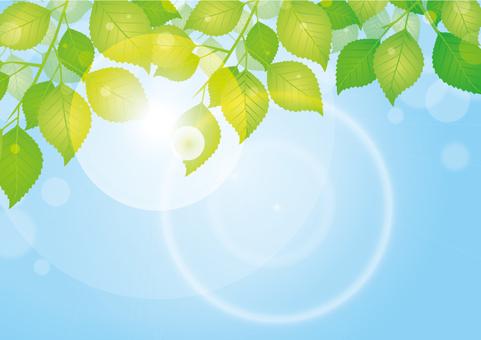 Natural background / sunbeams through leaves / fresh green