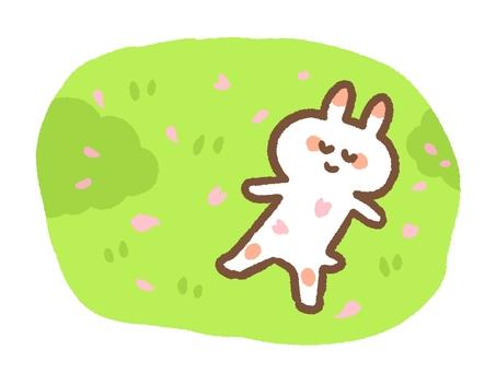 桜吹雪のお昼寝