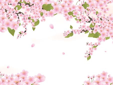 Sakura 06