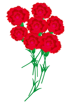 Carnation bundle 2