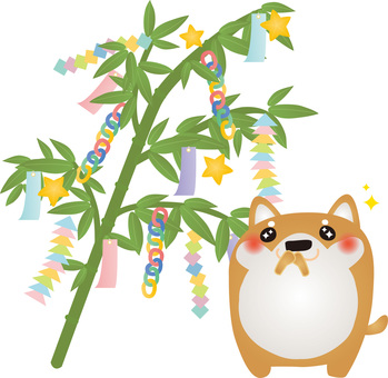 Shiba Inu Tanabata