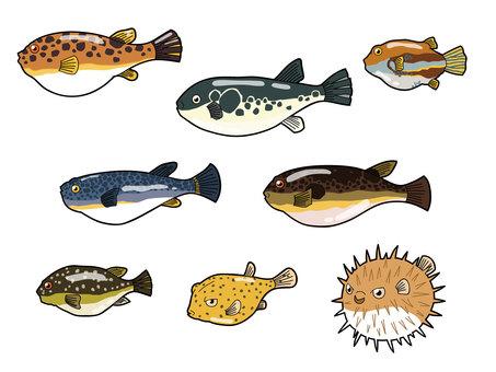8 species of puffer fish