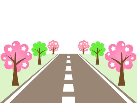 벚꽃 피는 길