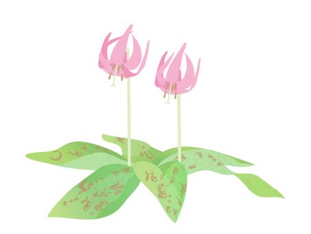 Katakuri flowers