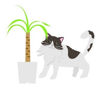 Houseplants and cats