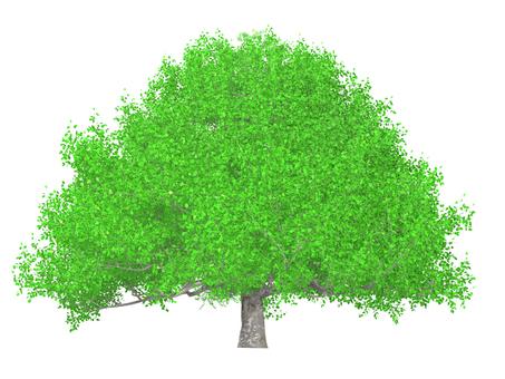 Big tree _ 007