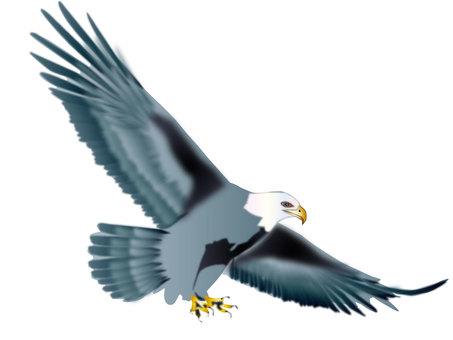 독수리 11
