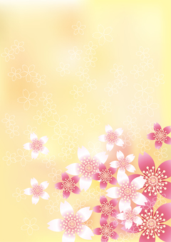 벚꽃의 꽃 78