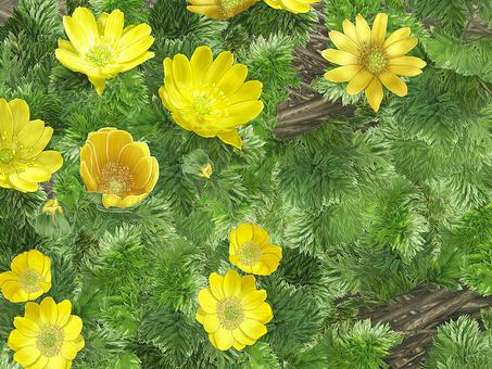 Fukuge's flower