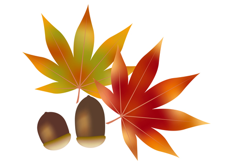 Autumn leaves & acorns 5