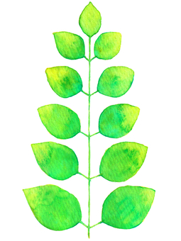 Leaves 01 (watercolor illustration)