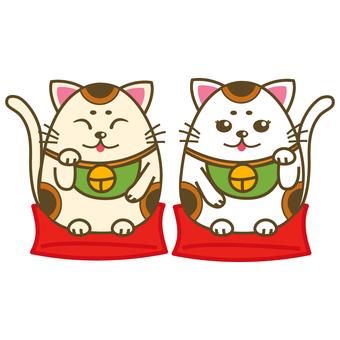 088 - Cheek cat