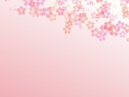 Sakura background pink