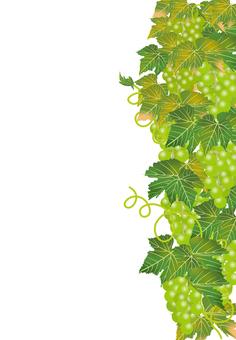 Delicious grapes 35