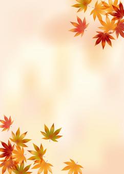 Autumn leaves 212