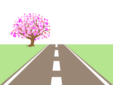 Cherry tree straight on the road