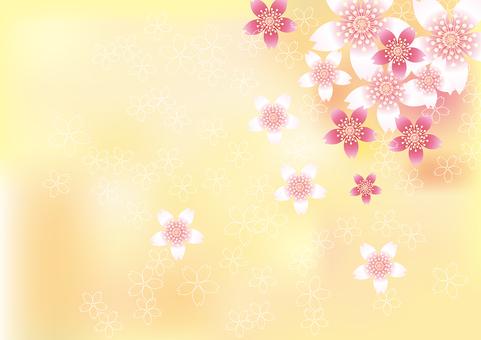 벚꽃의 꽃 83