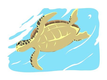 수영 바다 거북