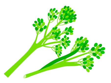 Stick broccoli