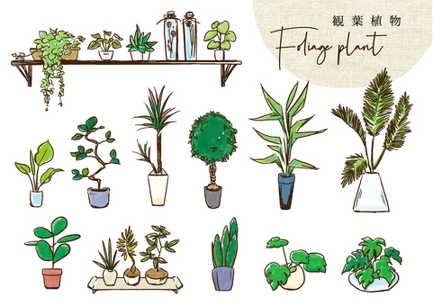 Houseplant color
