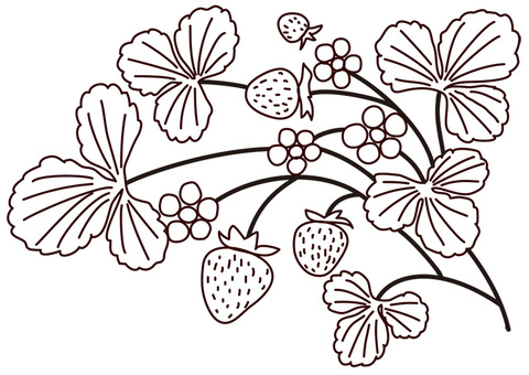 Ichigo drawing
