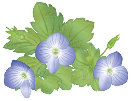 Flower of spring / spring