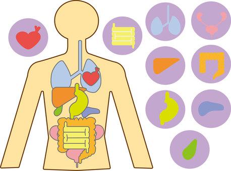 Human body diagram ③