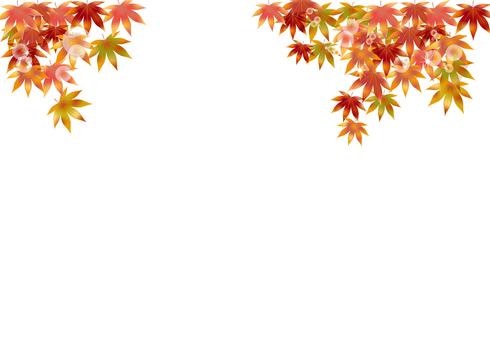 Autumn leaves 292