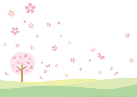 Cherry blossom background _ One cherry tree