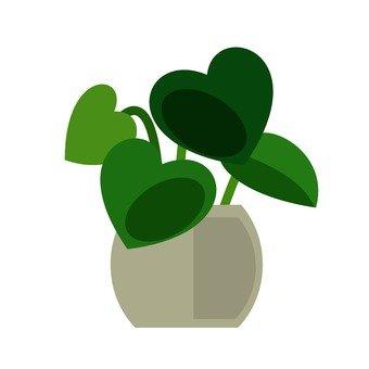 관엽 식물 6