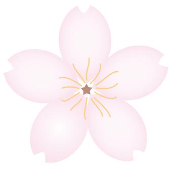Sakura 08