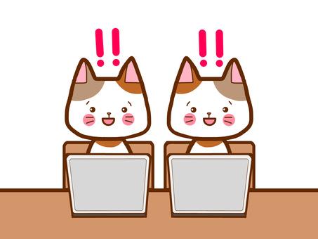 PC study cat solution