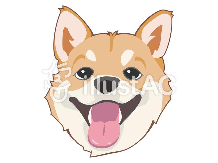 顔-柴犬のイラスト